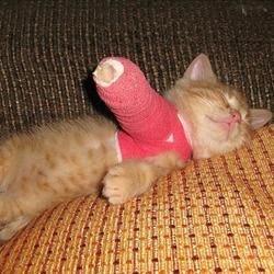 broken arm cat