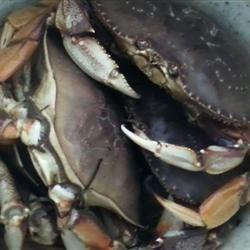 Crabs 8 count