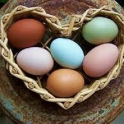 My Chickens' eggs.