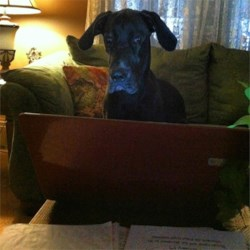 Fred lookin' up dog treat recipes on AR!