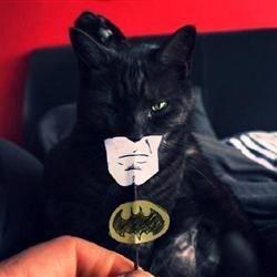 Cat Man