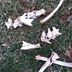 What kind of bones are these?