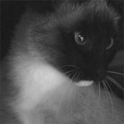 Perkins the Kitten