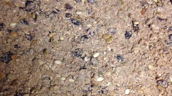 Homemade Protein Bars - Paleo Friendly