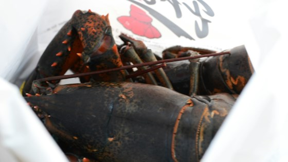 Chocolate Lobster