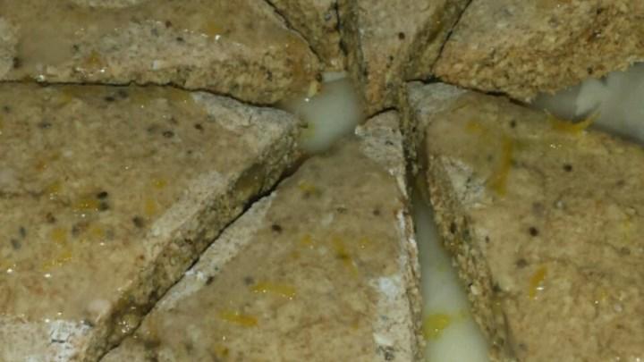 Vegan Lemon Scones with Chia