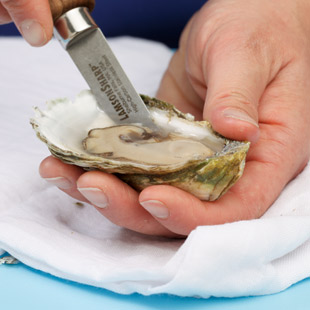 Step 5: Detach the Oyster from the Bottom Shell