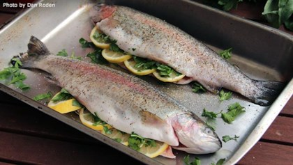 Trout Recipes Allrecipes