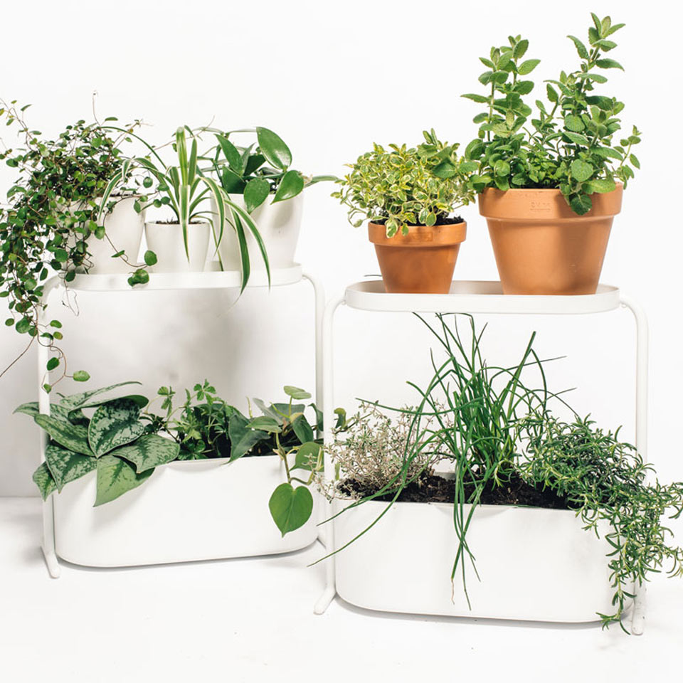 DIY Desktop Herb Garden to Help You Zen Out at Work
