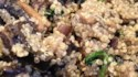 More pictures of Quinoa with Mushrooms