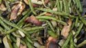 More pictures of Grilled Fresh Green Beans