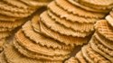 More pictures of Pizzelles I