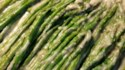 More pictures of Aromatic Asparagus