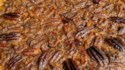 More pictures of New Orleans Chocolate Bourbon Pecan Pie
