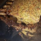Mint Crusted Rack of Lamb - This herb-crusted rack of lamb makes an elegant special occasion dinner.