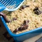 "Kitty Litter Cake - Great Halloween cake!  You'll need a new kitty litter box, box liner and litter scoop as ""props"" to get the full effect with this cake!"