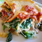 Spinach Lasagna III - Fresh spinach and plenty of ricotta, Romano and mozzarella make this a cheesy and hearty dish. This lasagna can also be made without the spinach.