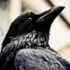 RavenSkies777