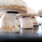Meringue Mushrooms - These take a bit of work and time, but are spectacular. They are highly prized for Christmas gift-giving! As with other meringue recipes, these should only be made on a dry day. You will need a pastry bag with a plain tip. If you can save some green plastic berry baskets from the summertime, these mushrooms look totally realistic placed in them.