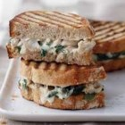 Alfredo Florentine Chicken Panini - Wilted spinach, shredded chicken and cheese in a creamy sauce makes delicious panini filling on crusty bread spread with additional cream sauce.
