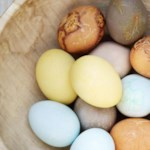 Yellow Natural Egg Dye & Egg Coloring