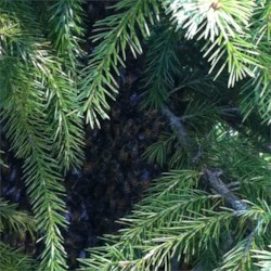 bees in the trees