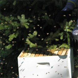 The bees are a little stirred up at the moment.