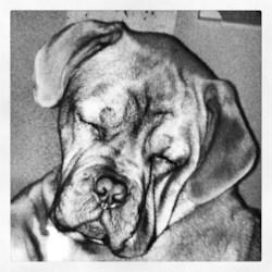 My French Mastiff, Kujo