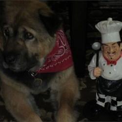 Sophie & Chef Luigi