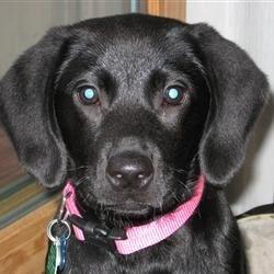 """Taste Tester"" - My Dog Jo Jo"