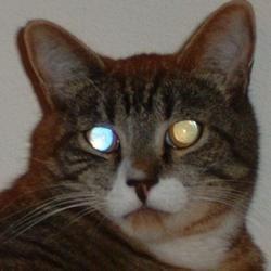 Loki, my awesome kitty