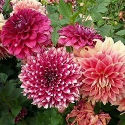 beauty ful flower