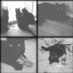 My 3 babies - Shylah, Tessa & Oz