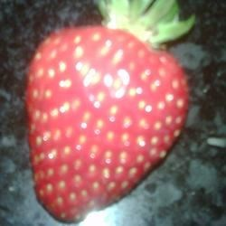 First Strawberry 2009