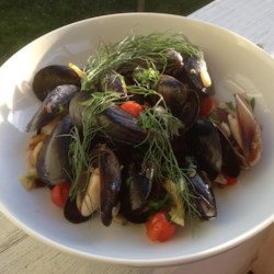 Mussels in a Fennel and White Wine Broth Recipe