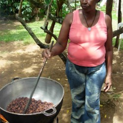 Roasting the cacao beans