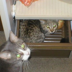 Kitties Checkin' Out the Fridge