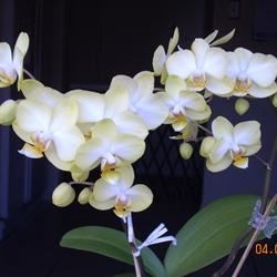 My Beautiful Orchid!!