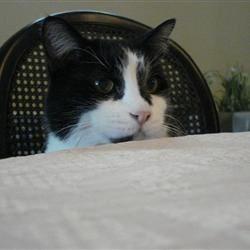 Mischief, waiting for dinner
