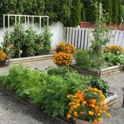 My Vegetable Garden