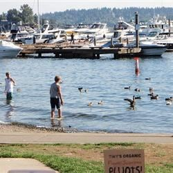 Lake Washington scene right behind the market