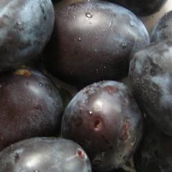 Italian plums