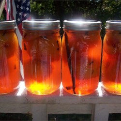 Pickled Peaches Recipe