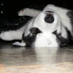 Neeko my puppy