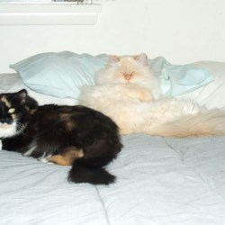 2 of my 4 crazy catz
