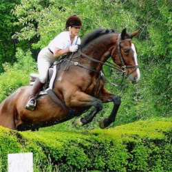 My other passion: riding my  Irish Sport Horse,