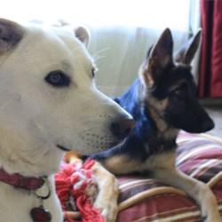 Bella & Maddie
