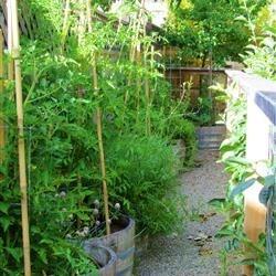 Parent's Garden 2010