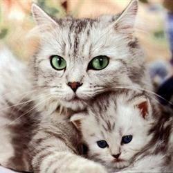 Kittycook