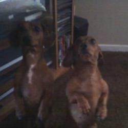 Dasha & Winston